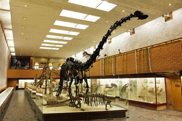Останки сибирского динозавра впервый раз покажут навыставке в столице