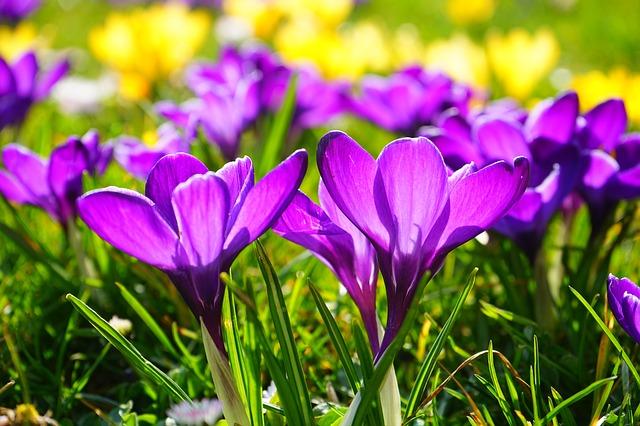 Фестиваль «Новая весна» пройдет вапреле впоселении Киевский свежей  столицы